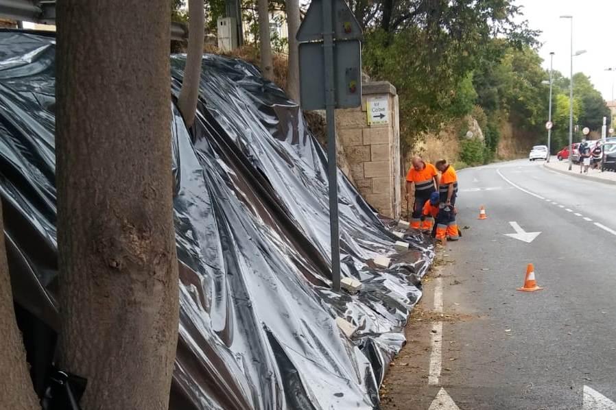 El ayuntamiento intenta acabar con el ailanto sin herbicidas