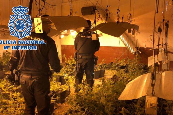 Desmantella un cultiu de marihuana i deté a quatre persones a Alcoi