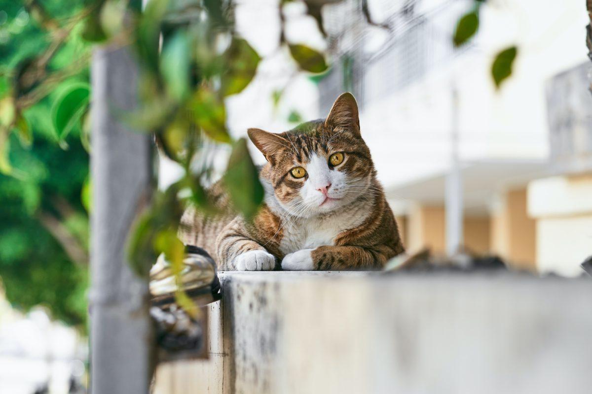L'Ajuntament rep una subvenció per a l'esterilització de colònies urbanes de gats