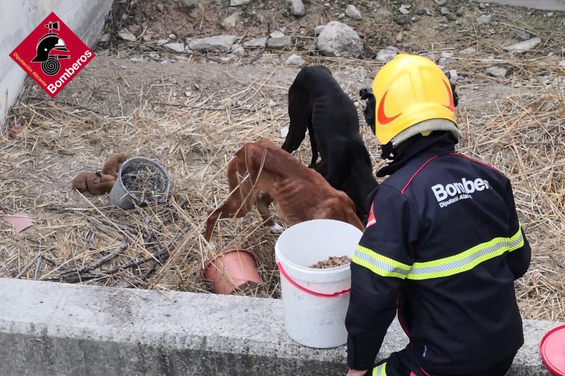 Els bombers rescaten a sis gossos abandonats