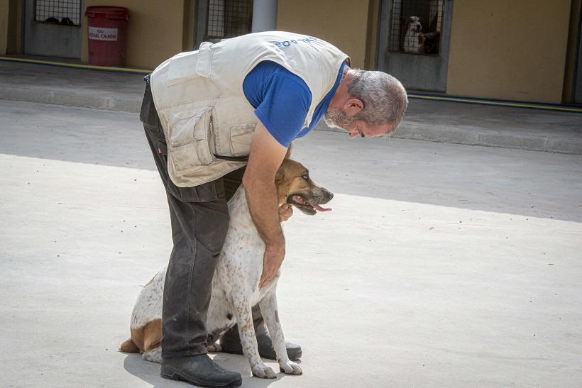 Ciudadanos plantea habilitar un cementerio de mascotas municipal