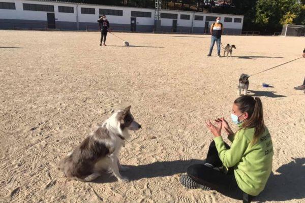 La setmana que ve donarà principi la segona edició d'educació canina urbana