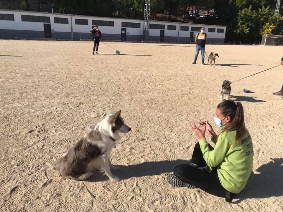 Segunda edición de educación canina urbana