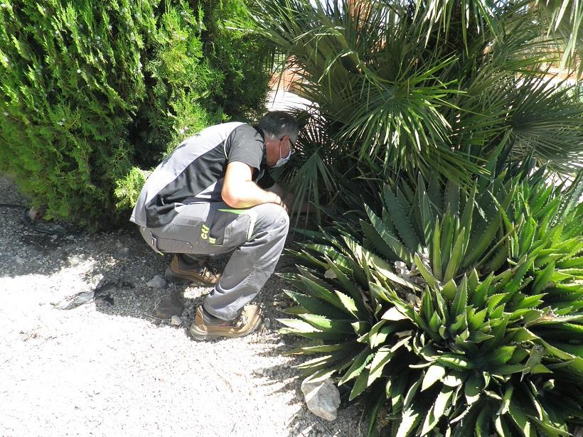 Ibi toma medidas para combatir al mosquito tigre