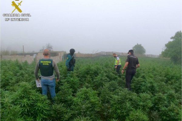 La Policia Nacional i la Guàrdia Civil confisquen quasi 15.000 plantes de marihuana